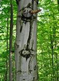 Зеленое высокое лиственное дерево Стоковые Изображения RF