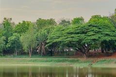 Зеленое гигантское дерево Стоковая Фотография RF