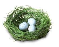 Зеленое гнездо птицы с голубыми яичками стоковая фотография rf