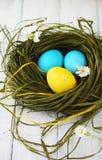 Зеленое гнездо с покрашенными яичками Стоковое Изображение