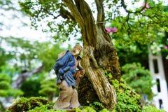 Зеленое дерево бонзаев в саде Стоковые Изображения