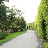 Зеленое дерево в природном парке Стоковое фото RF