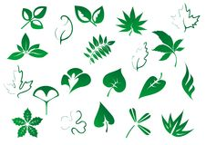 Зеленое дерево и засаживает установленные листья Стоковая Фотография