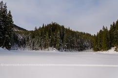 Зеленое дерево на переднем плане Горный вид зимы на зоре стоковые изображения rf