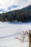 Зеленое дерево на переднем плане Горный вид зимы на зоре стоковая фотография rf