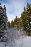 Зеленое дерево на переднем плане Горный вид зимы на зоре стоковые фото