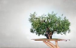 Зеленое дерево на подносе Мультимедиа стоковое фото rf