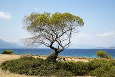 Зеленое дерево на предпосылке моря Стоковое Изображение