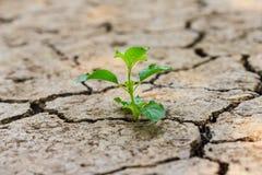 Зеленое дерево растя через сухую треснутую почву Стоковые Фотографии RF
