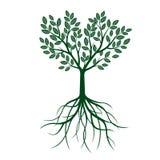 Зеленое дерево с листьями и корнями также вектор иллюстрации притяжки corel Стоковые Фото