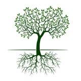 Зеленое дерево с листьями и корнями бесплатная иллюстрация