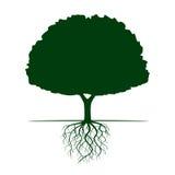 Зеленое дерево с корнями также вектор иллюстрации притяжки corel иллюстрация штока