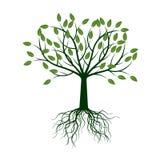 Зеленое дерево с корнями также вектор иллюстрации притяжки corel Стоковое Фото