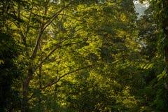 Зеленое дерево Стоковая Фотография