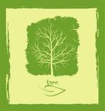 Зеленое дерево Стоковое Изображение
