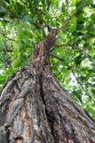 Зеленое дерево Стоковое фото RF