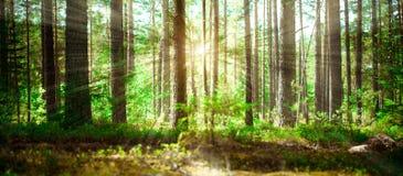 зеленое лето ландшафта Стоковое Изображение RF