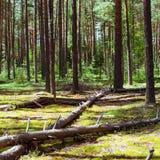 зеленое лето ландшафта Стоковые Фотографии RF