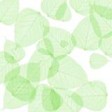Зеленое лето выходит предпосылка стоковое фото