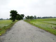 зеленое изображение hd дороги Стоковое Изображение RF
