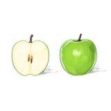 Зеленое изолированное яблоко с отрезанной половинной притяжкой эскиза Стоковые Изображения