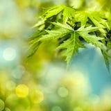 Зеленое листво лета стоковое изображение