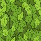 Зеленое листво Стоковое Изображение RF