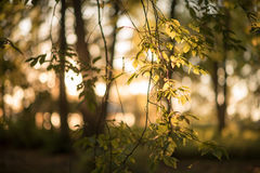 Зеленое листво Стоковые Фотографии RF