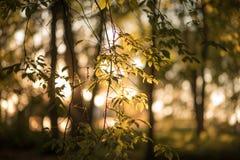 Зеленое листво Стоковые Изображения RF