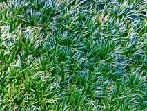 Зеленое листво Стоковая Фотография RF