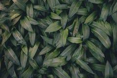 Зеленое листво Стоковое фото RF