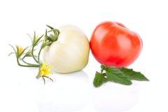 2 зеленое и красные томаты Стоковое Фото