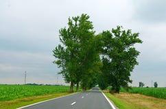 Зеленое кукурузное поле с зелеными деревьями среди дороги Стоковое Изображение
