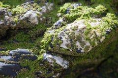Зеленое море деланное пи-пи на белых вулканических породах Стоковые Изображения RF
