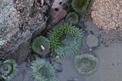 зеленое море Стоковое Изображение