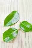 3 зеленое намочили листья Стоковое Изображение