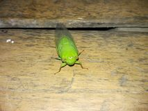 зеленое насекомое Стоковые Изображения RF