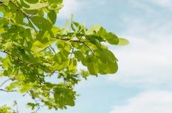 зеленое небо листьев Стоковые Фото