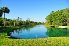 зеленое озеро Стоковое Фото