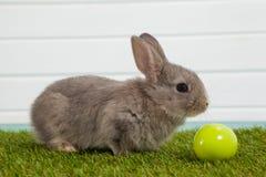 Зеленое пасхальное яйцо и зайчик пасхи сидя на траве Стоковые Фотографии RF