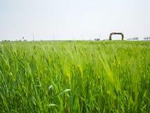Зеленое поле в парке Haneul Стоковое Изображение RF