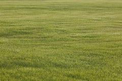 Зеленое поле в сельской местности Ландшафт предпосылки природы Agr Стоковое Фото