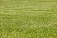 Зеленое поле в сельской местности Ландшафт предпосылки природы Agr Стоковая Фотография RF