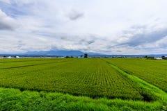 Зеленое поле в Хоккаидо Стоковое Изображение RF