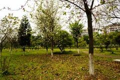 зеленое поле деревьев весной Стоковые Изображения