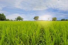 Зеленое поле и белое небо облака и голубых Стоковое фото RF