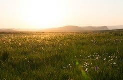 Зеленое поле на небе захода солнца Стоковое Изображение RF
