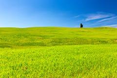 Зеленое поле под голубым небом Стоковые Фото