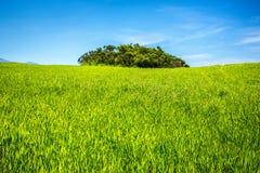 Зеленое поле под голубым небом Стоковое Изображение