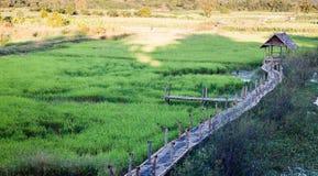 Зеленое поле риса в Chiang Rai, Таиланде Стоковые Фотографии RF